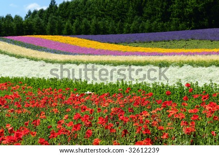 sea of flower - stock photo