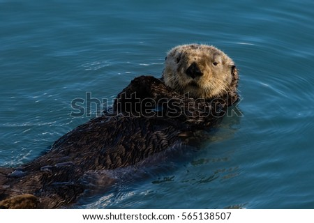 Sea otter checking out visiting tourists\n\n