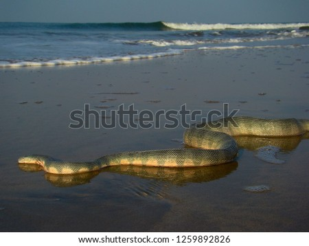 sea poisonous snake crawling along the ocean shore, picture of snake.