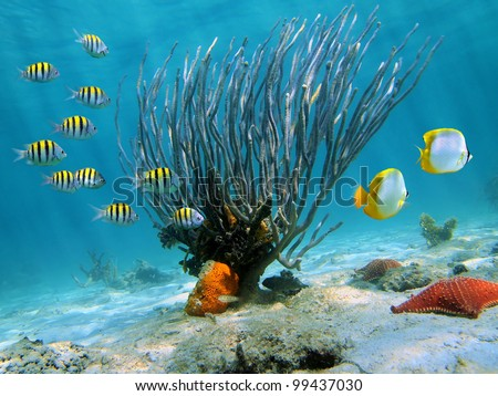 Sea rod on sandy seabed with colorful tropical fish