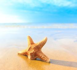 Sea Sand Fish