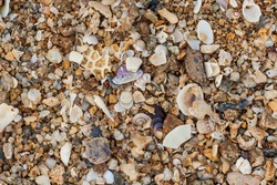 Sea sand texture made of shell and stone pieces. Seamless texture