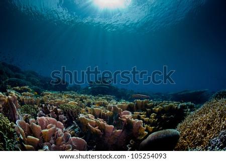 sea scape aquarium