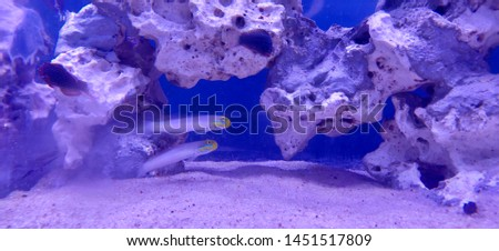 Sea sea life sea fish deep sea #1451517809