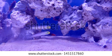 Sea sea life sea fish deep sea #1451517860