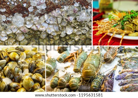 sea set picture compilation. Sea shells mussels gray shrimps in ice tray of sea delicacies. Finished large lobster stuffed surface with seashells