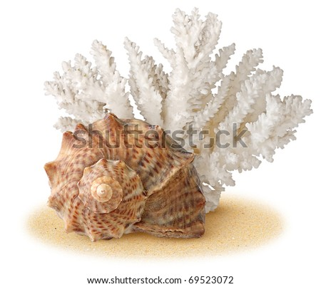 Sea shell and coral over sand