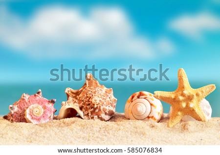 Sea shell and starfish on the sandy beach near the sea. Summer beach.