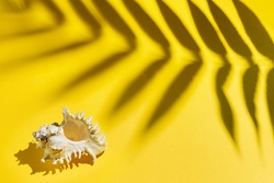 Sea shell and the shadow from the branch of a plant on a bright yellow background. Summer vacation concept.