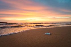 Sea shell at a beach at a beautiful sunrise