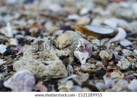 Sea shell background. shell collection on beach. close up shells and coral.