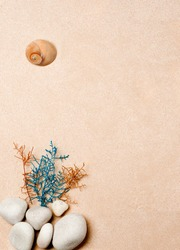 sea shell, branches of classic blue and orange plants, with beach stones, on sandy beach background, top view