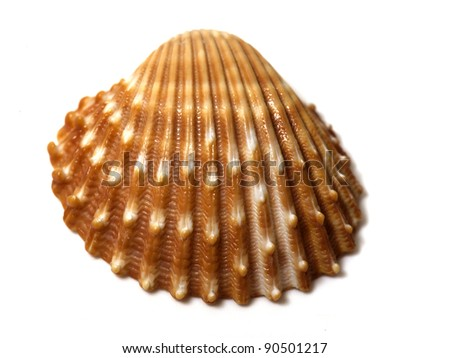 sea shell close up isolated