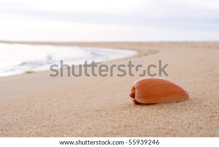 beach sand background. in each sand background