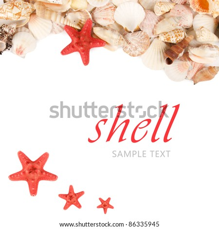 Sea shell isolated on a white background