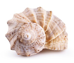 Sea shell isolated on a white background. Clipping Path