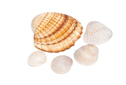 Sea shell isolated on the white background