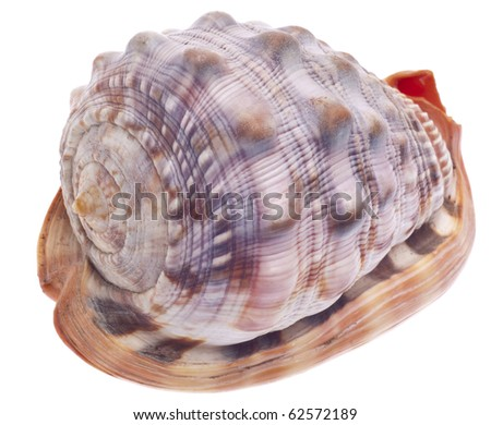 Sea Shell Isolated on White with a Clipping Path.