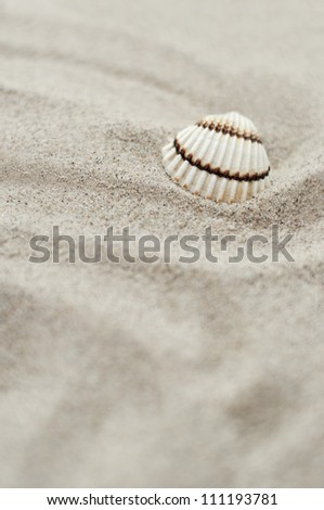 Sea shell on sand. - stock photo
