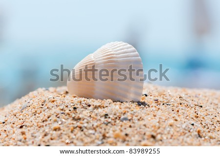 Sea shell on sand close up. Vacation memories concept.