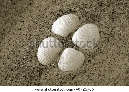 sea shell on the sand on beach from heart shaped scallop creating figure of four