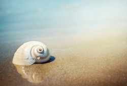 Sea shell on the sea and sandy beach blurred background. Write Your Text Here.