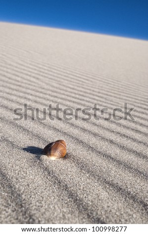 Sea Shell on wind blown sand lines