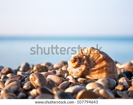 Sea shell with sea and blue sky on background
