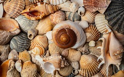 sea shells a textured background
