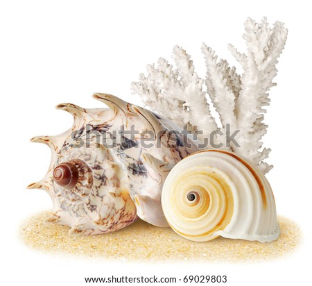 Sea shells and coral over sand