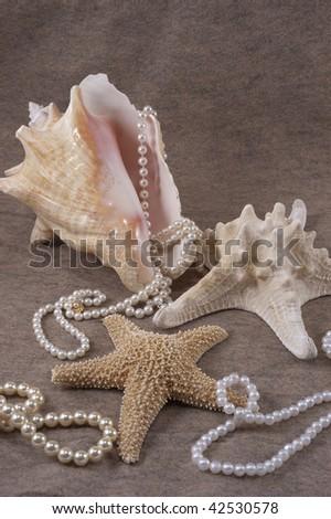 Sea Shells and Pearls