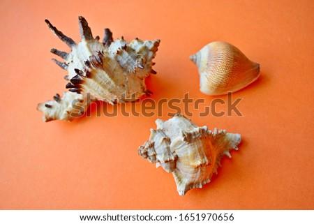 Sea shells and shells on an orange background