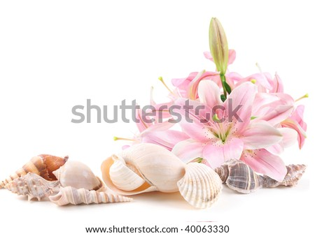 Sea shells and tropical flowers isolated on white background