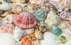 Sea shells arranged on isolating white background