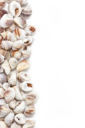 Sea shells border isolated on white background with text space.