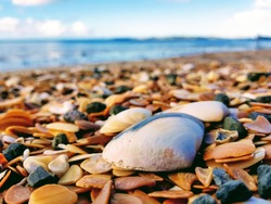 Sea shells by the beach overlooking the horizon