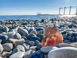 Sea shells closeup. A beautiful shell on the pebbled seashore. Conch shells at the beach, selective focus. Coast background
