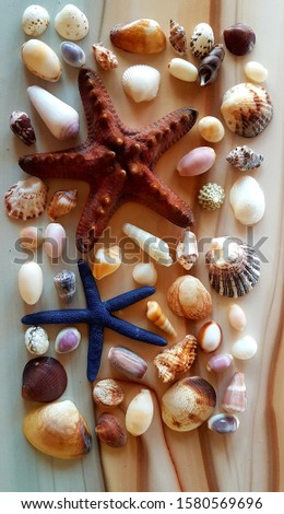 sea shells collected from the beach