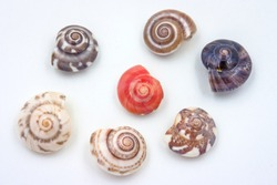 Sea shells collected on the coast of Thailand on white background, Focus red clam.