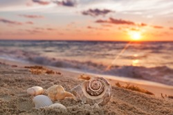 Sea Shells Collected on Tropical Sandy Beach with Sunrise over Ocean as a background in Mexico, Cancun, selective focus, vacation concept