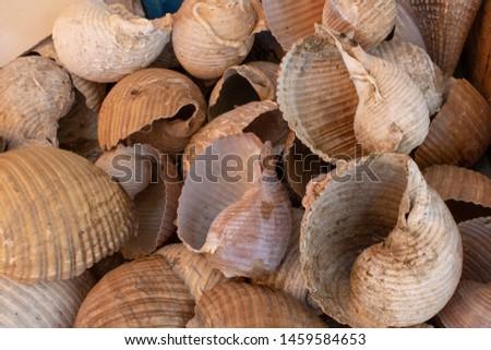 Sea shells handmade ornament handmade. Ayvalik was taken on the island of Cunda. #1459584653