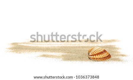 Sea shells in sand pile isolated on white background #1036373848