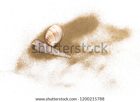 Sea shells in sand pile isolated on white background, top view
