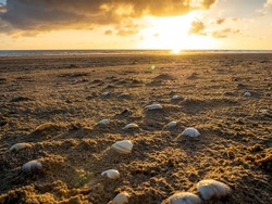 Sea shells in the sand at sunrise