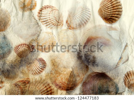 Sea shells on old paper background