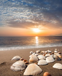 sea shells on sand background at dusk