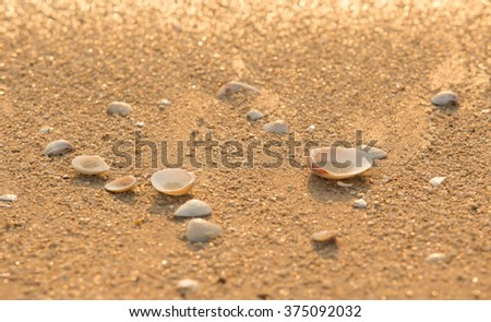 sea shells on sand background  in the sunset #375092032