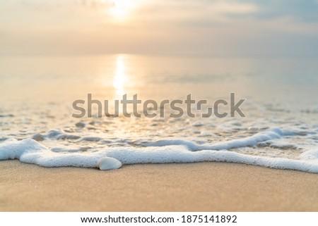 Sea shells on sand. sea waves  on the golden sand at beach