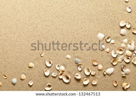 Stock Photo Sea shells on sand. Summer beach background. Top view