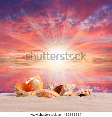 Sea shells on the beach and beautiful sunset over a tropical sea.